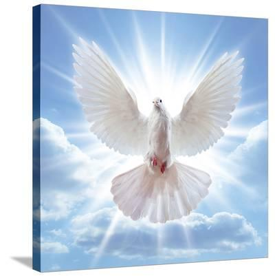 Peace Dove in-Front Of The Sun--Stretched Canvas Print