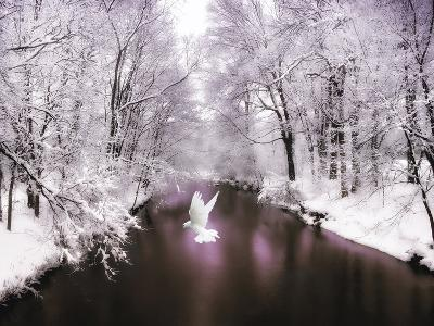 Peace on Earth-Jessica Jenney-Photographic Print