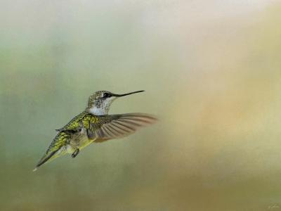 Peaceful Day with a Hummingbird-Jai Johnson-Giclee Print
