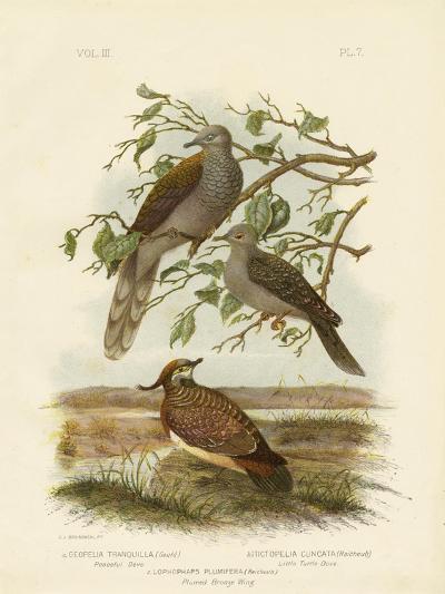 Peaceful Dove, 1891-Gracius Broinowski-Giclee Print