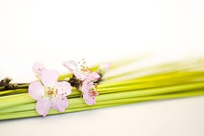 https://imgc.artprintimages.com/img/print/peach-blossoms-and-blades-of-grass_u-l-q11x8om0.jpg?p=0