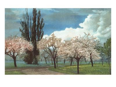 Peach Blossoms, Country Lane--Art Print