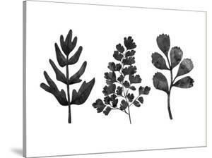 Grey Ferns by Peach & Gold