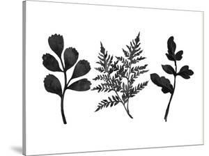 Tree Ferns by Peach & Gold