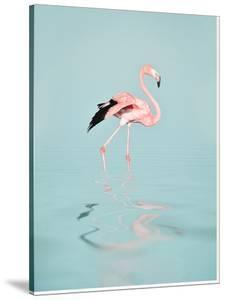 Tropical Flamingo by Peach & Gold
