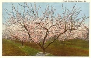 Peach Orchard, Perry, Georgia
