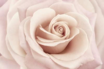 https://imgc.artprintimages.com/img/print/peach-pink-rose_u-l-q12ty820.jpg?p=0