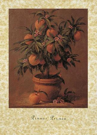 https://imgc.artprintimages.com/img/print/peach-tree_u-l-f7tunf0.jpg?p=0
