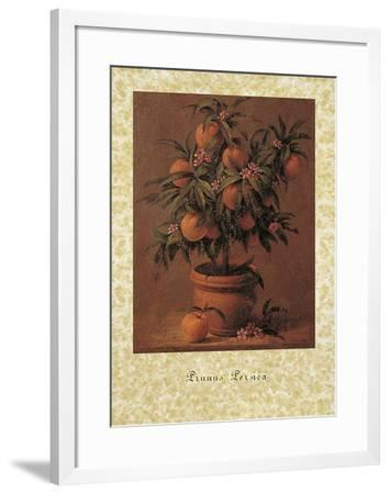 Peach Tree-Joaquin Moragues-Framed Art Print