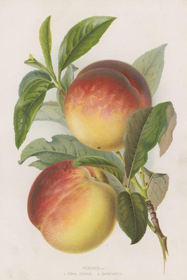 Peaches--Giclee Print