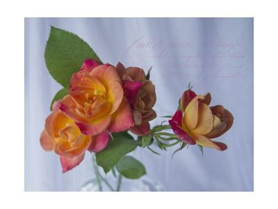 Peachy Rose-Bob Rouse-Giclee Print