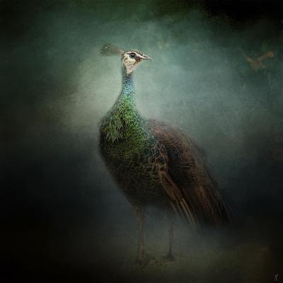 Peacock 2-Jai Johnson-Giclee Print
