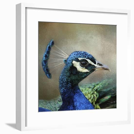 Peacock 3-Jai Johnson-Framed Giclee Print