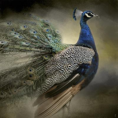 Peacock 5-Jai Johnson-Giclee Print
