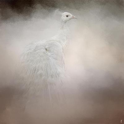 Peacock 6-Jai Johnson-Giclee Print