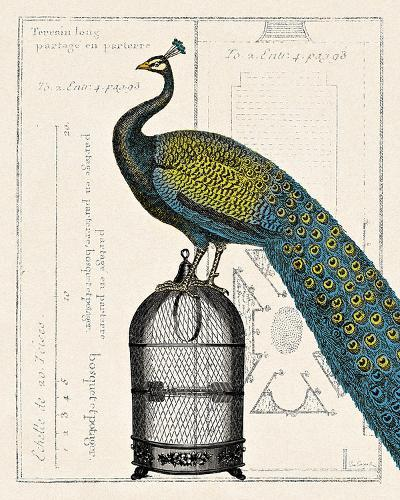 Peacock Birdcage II-Sue Schlabach-Art Print