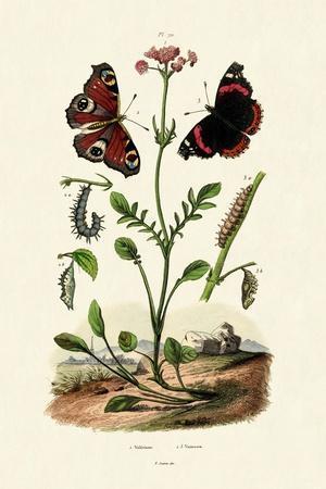https://imgc.artprintimages.com/img/print/peacock-butterfly-1833-39_u-l-pvd4uw0.jpg?p=0