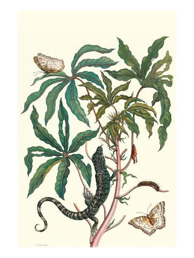 Peacock Butterfly with a Lizard-Maria Sibylla Merian-Premium Giclee Print