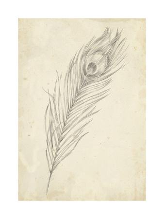 Peacock Feather Sketch II-Ethan Harper-Art Print