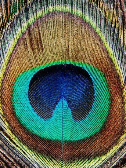 Peacock Feather-LILA X LOLA-Art Print