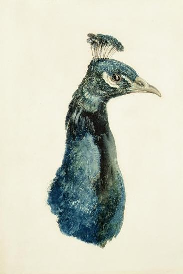 Peacock, from the Farnley Book of Birds, C.1816-J^ M^ W^ Turner-Giclee Print