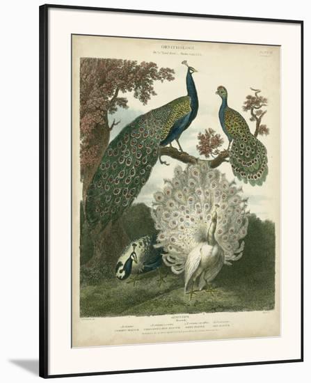 Peacock Gathering-Sydenham Teast Edwards-Framed Art Print