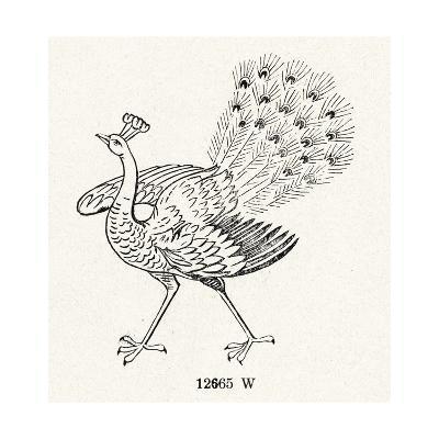 Peacock Line Illustration--Art Print