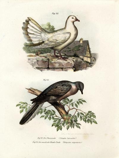 Peacock Pigeon, 1864--Giclee Print