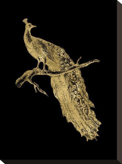Peacock Single Golden Black-Amy Brinkman-Stretched Canvas Print