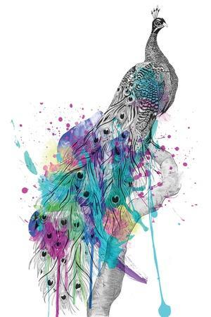 https://imgc.artprintimages.com/img/print/peacock_u-l-q1gubas0.jpg?p=0
