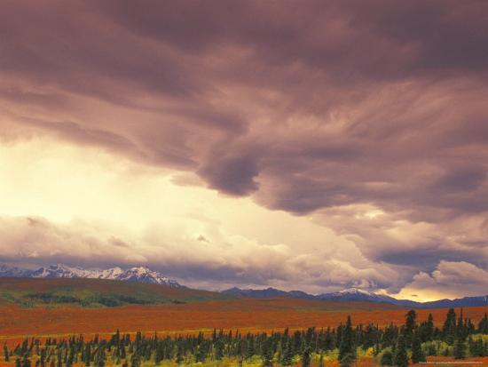 Peak Fall Colors, Denali National Park, Alaska, USA-Stuart Westmoreland-Photographic Print