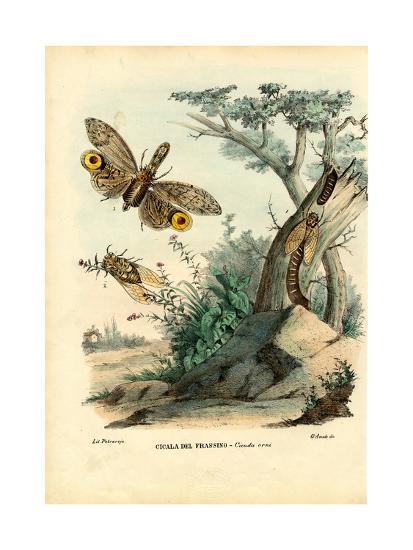 Peanut-Head Bug, 1863-79-Raimundo Petraroja-Giclee Print
