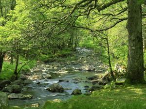 Afon Artro Passing Through Natural Oak Wood, Llanbedr, Gwynedd, Wales, United Kingdom, Europe by Pearl Bucknall