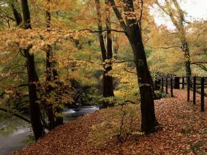 Breezy Autumn Day by the River Brathay Footbridge, Skelwith Bridge, Cumbria, England by Pearl Bucknall