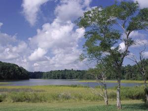 Indian Field Creek, on Colonial Highway, Near Williamsburg, Virginia, USA by Pearl Bucknall