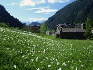 Poet's Narcissus and Tiny Old Church Above Arinsal Village, Arinsal, Andorra, Pyrenees by Pearl Bucknall