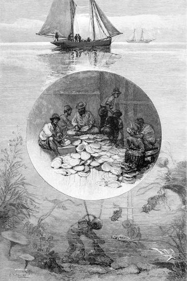 Pearl Fishery, Torres Strait, Australia, 1886--Giclee Print
