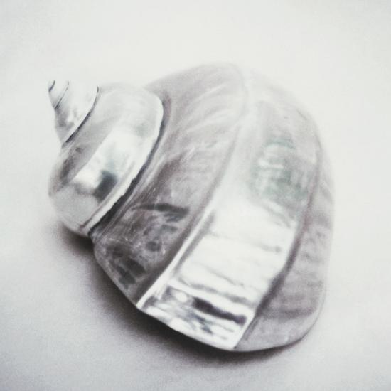 Pearl Turban Shell-John Kuss-Photographic Print