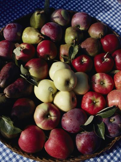 Pears and Varieties of Apples in a Bowl at the Tilth Festival in Seattle-Sam Abell-Photographic Print