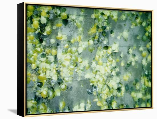 Peas in Water--Framed Canvas Print