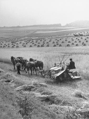 Peasant Farmers Working in Wheat Fields