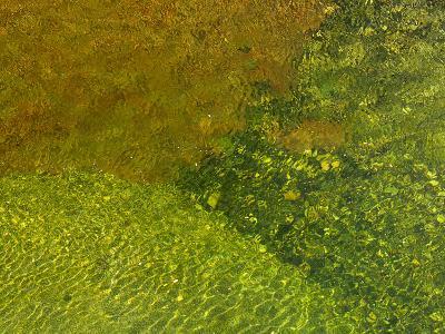 Pebbles on a Creek Bottom Seen Through Water-Raul Touzon-Photographic Print