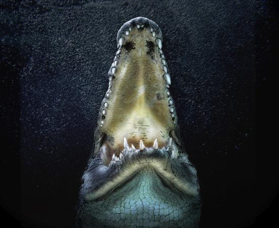 pedro-jarque-jaws