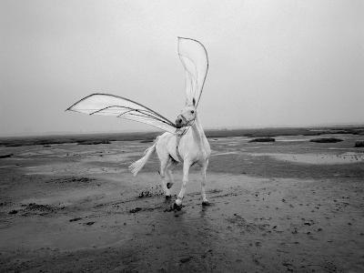 Pegasus 2-Jaschi Klein-Premium Photographic Print
