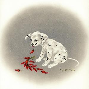 Dalmation 5 - Chile Dog by Peggy Harris