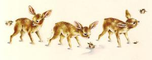 Fawns by Peggy Harris