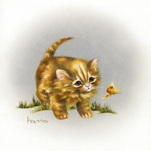 Fraidy Cat by Peggy Harris