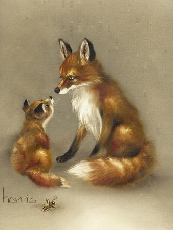 Little Fox Lost