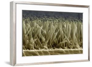 Zinc Oxide Nanowires, SEM by Peidong Yang