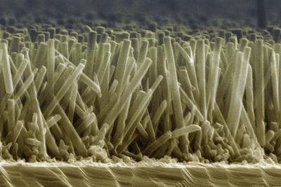 Zinc Oxide Nanowires, SEM